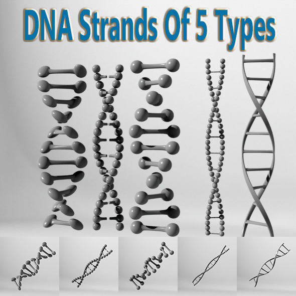 DNA Strands Of 5 Types - 3DOcean Item for Sale