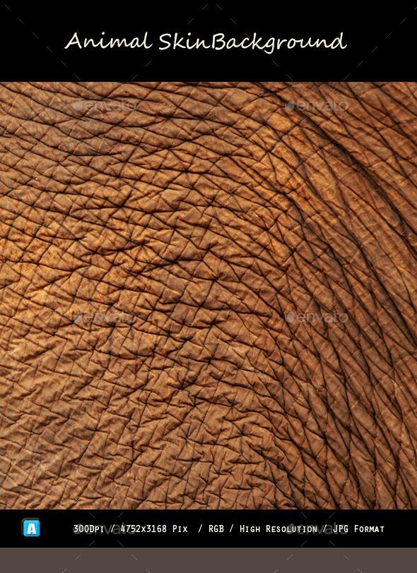 Animal Skin Texture 0101 - Textures