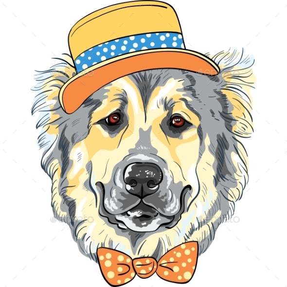 Caucasian Shepherd Dog Breed in Hat - Animals Characters