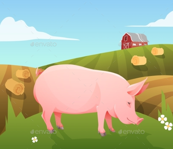 Pig on Farm - Animals Characters