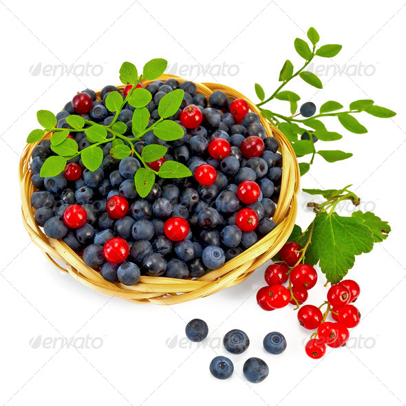 Blueberries with red currants - Stock Photo - Images