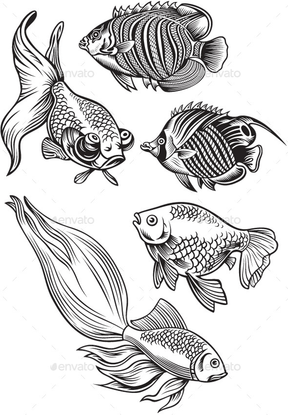 Aquarium Fish - Animals Characters