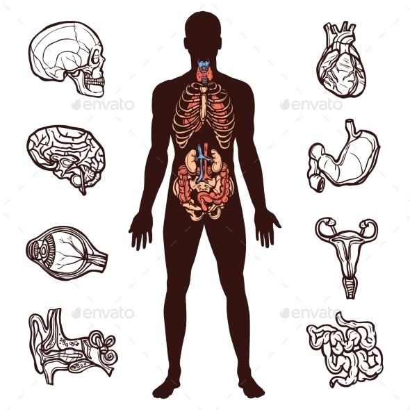 Human Anatomy Set - Health/Medicine Conceptual