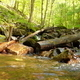 Small Creek in Forest - VideoHive Item for Sale