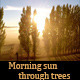 Morning sun through trees - VideoHive Item for Sale