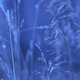 Winter Grass1 - VideoHive Item for Sale
