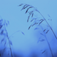 Winter Grass 2 - VideoHive Item for Sale