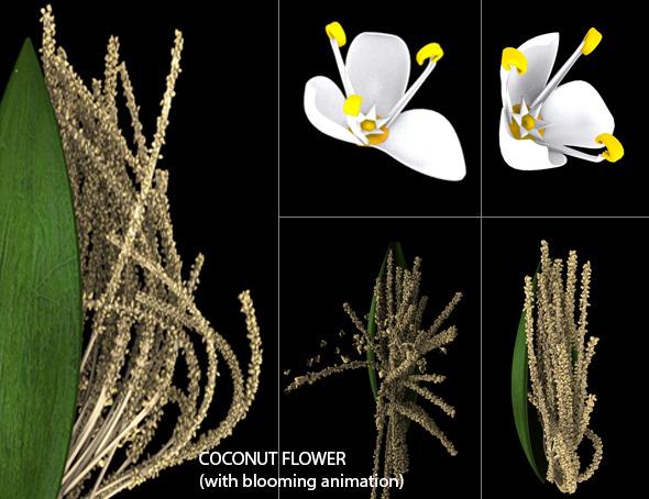 Coconet flower