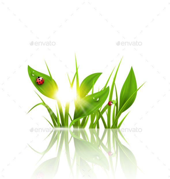 Green Grass and Ladybugs with Sunrise - Backgrounds Decorative