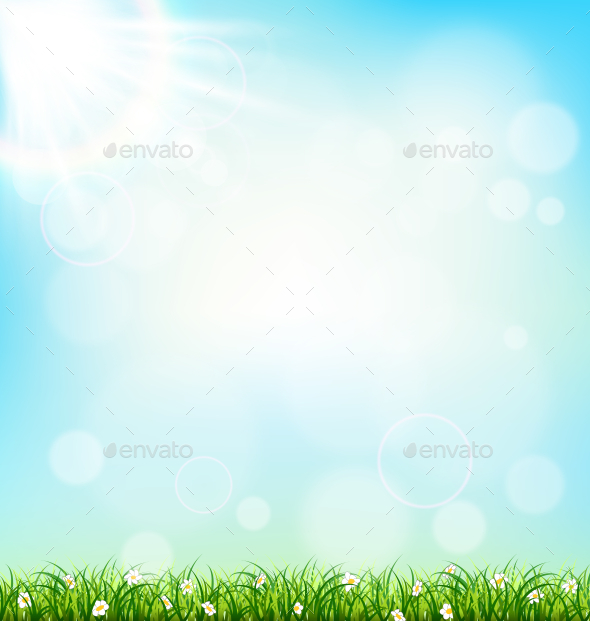Green Grass Lawn with Chamomiles on Blue Sky - Backgrounds Decorative