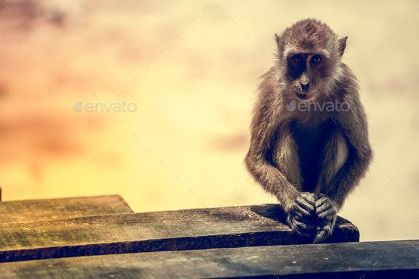 Portrait of the sad monkey. - Stock Photo - Images