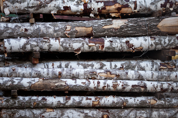 birch logs - Stock Photo - Images