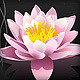 Lotus flowers - GraphicRiver Item for Sale