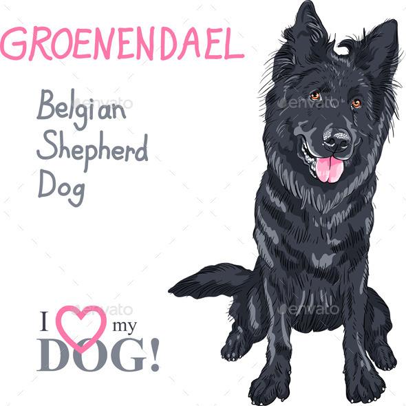 Dog Belgian Shepherd Dog - Animals Characters