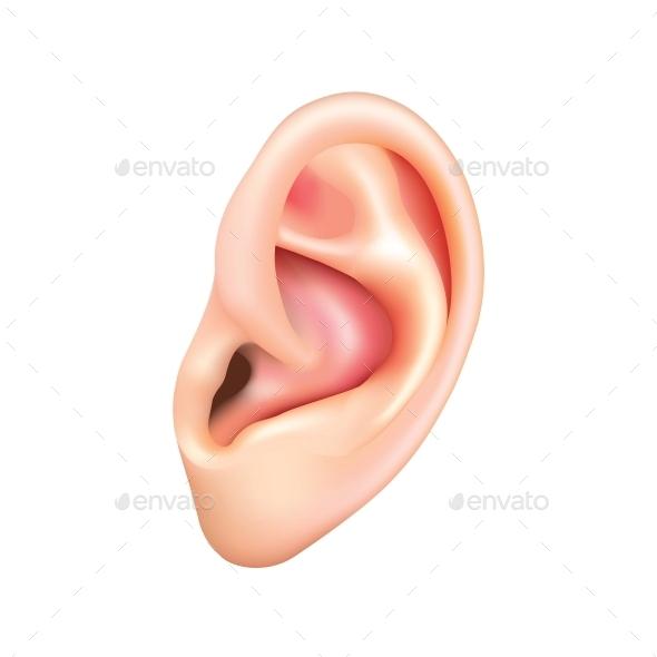 Human Ear Isolated - Health/Medicine Conceptual