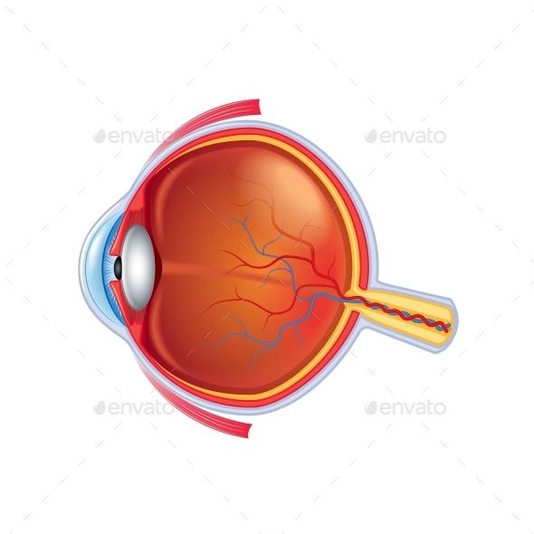 Eye Anatomy - Health/Medicine Conceptual