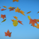 Autumn Leaves Flying - VideoHive Item for Sale