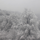 Winter Forest Aerial - VideoHive Item for Sale