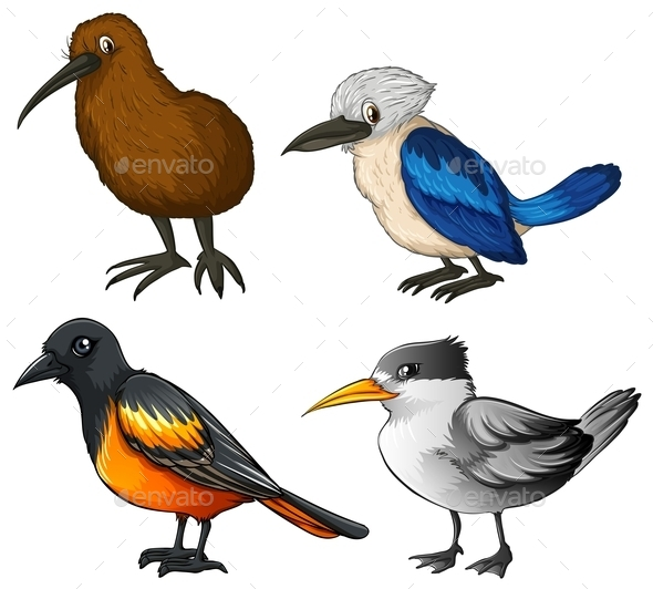 Birds - Animals Characters