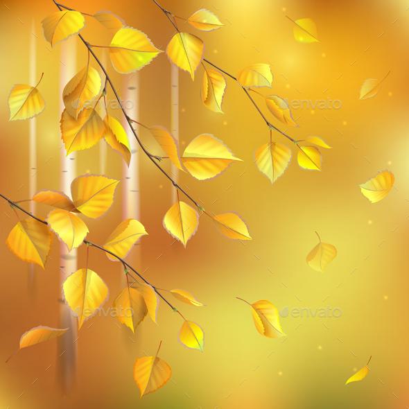 Birch Branches - Seasons Nature