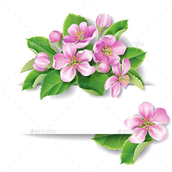 Apple Tree Blossom - Flowers & Plants Nature