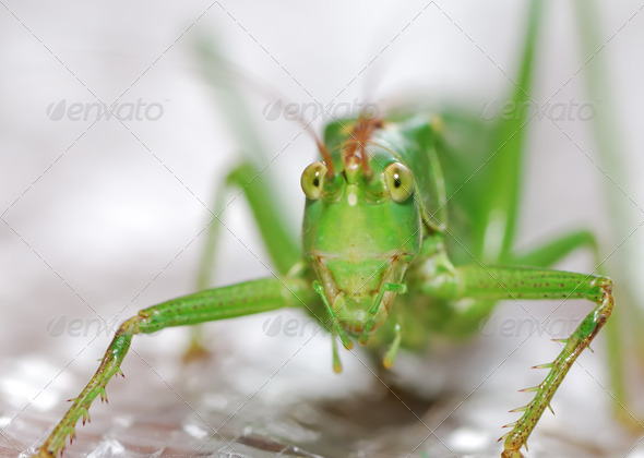 Grasshopper - Stock Photo - Images
