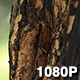 Wild Bees Buzz around Hive in Woods - VideoHive Item for Sale