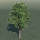 Green Tree  - 3DOcean Item for Sale