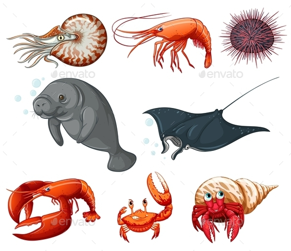 Sea Animals - Animals Characters