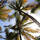 Sunbeams In The Palm Tree - VideoHive Item for Sale