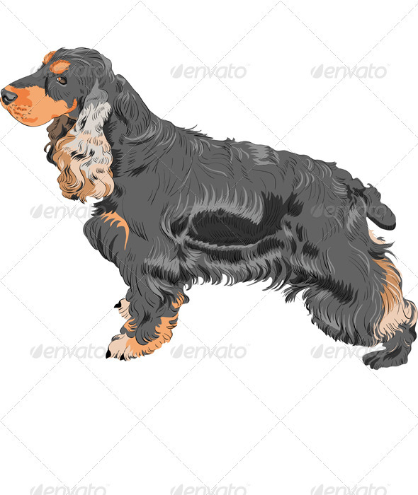 Vector Dog Black English Cocker Spaniel Breed - Animals Characters
