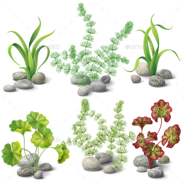 Different Kinds of Algae Set  - Flowers & Plants Nature