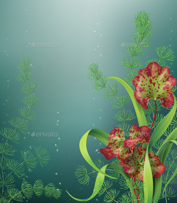 Underwater Background - Flowers & Plants Nature