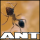 Macro Footage Of A Single Ant Eating An Orange - VideoHive Item for Sale