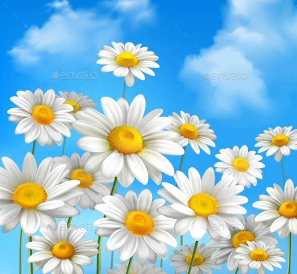 Daisies On Blue Sky - Flowers & Plants Nature