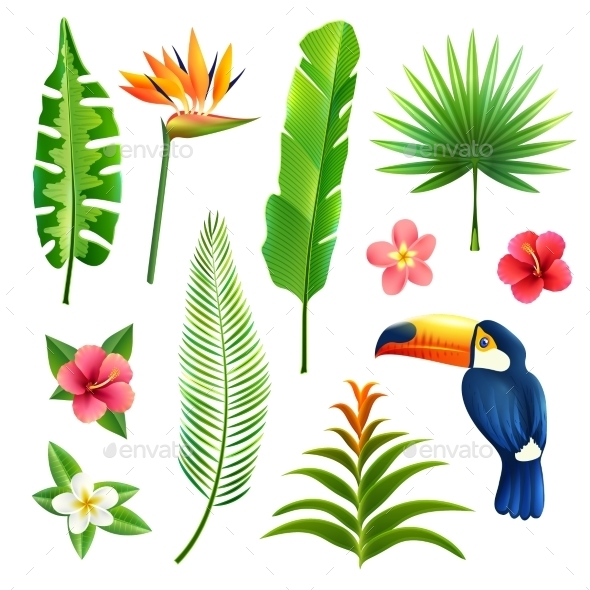Tropical Leaves Set - Flowers & Plants Nature