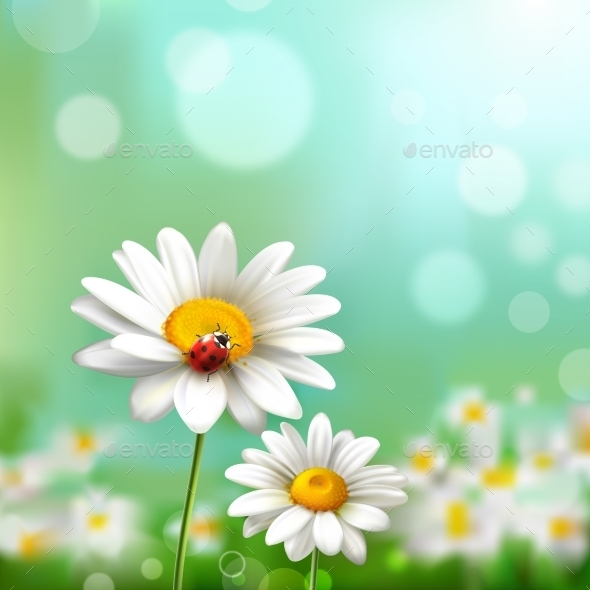 Daisies With Ladybug - Flowers & Plants Nature