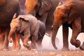 Elephants herd running - PhotoDune Item for Sale