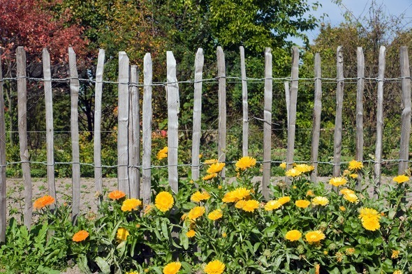 Flowers in front of a fence - Stock Photo - Images