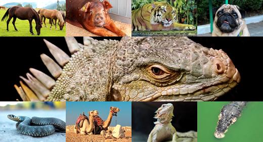 !!! ANIMALS