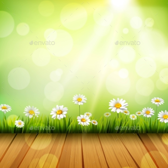 Spring Background With Daisies - Flowers & Plants Nature
