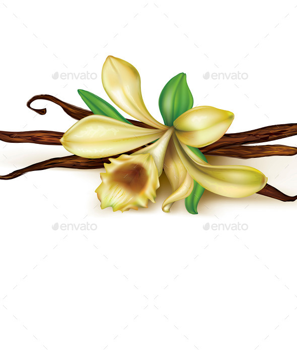 Vanilla Orchid - Organic Objects Objects