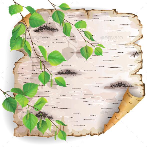 Piece of Birch Bark  - Seasons Nature