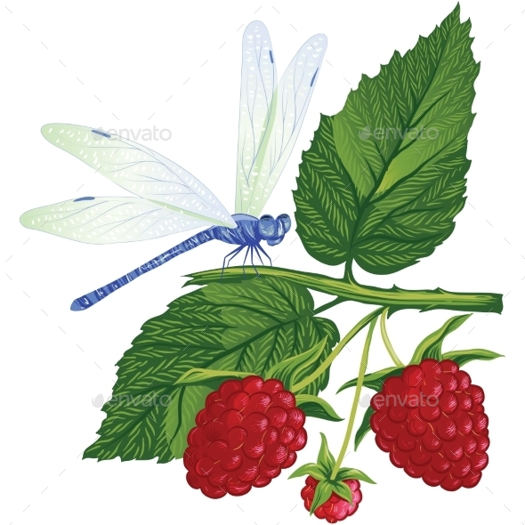 Dragonfly Sitting on the Raspberries. - Seasons Nature