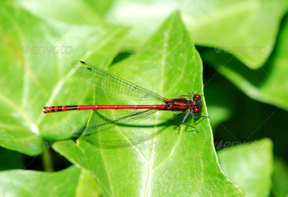 Dragonfly - Stock Photo - Images