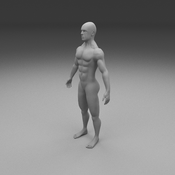 Muscular Human Male Clay Model - 3DOcean Item for Sale
