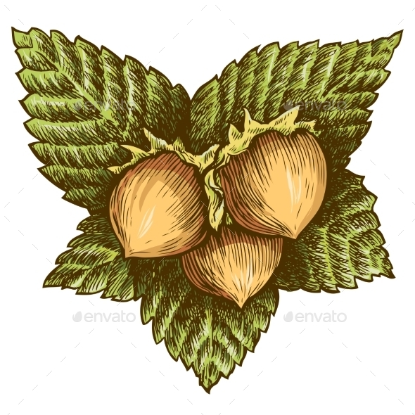Three Hazelnut - Food Objects