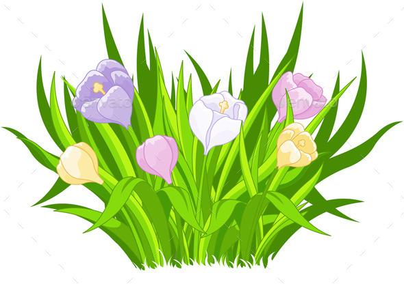 Crocus Bouquet - Flowers & Plants Nature