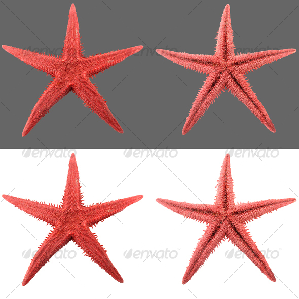 Starfish - Nature & Animals Isolated Objects