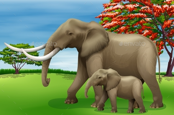 Elephant - Animals Characters